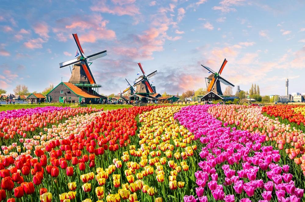 Mori de vant Olanda